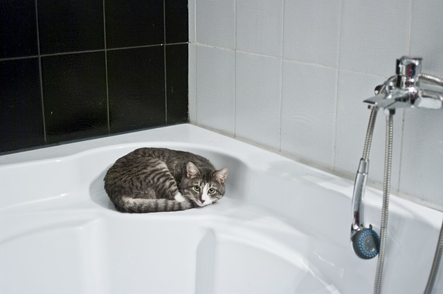 Cat Shower