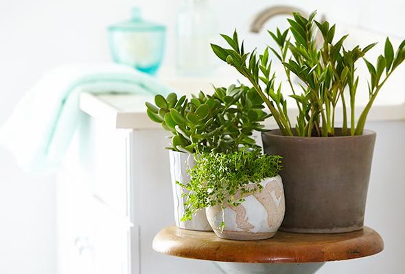 нискостеблени растения